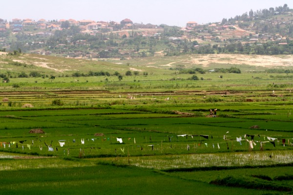 The tea farms of Rwanda - Edwina Storie